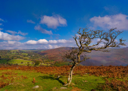 Valley of the River Dart. Dartmoor Devon Landscape
