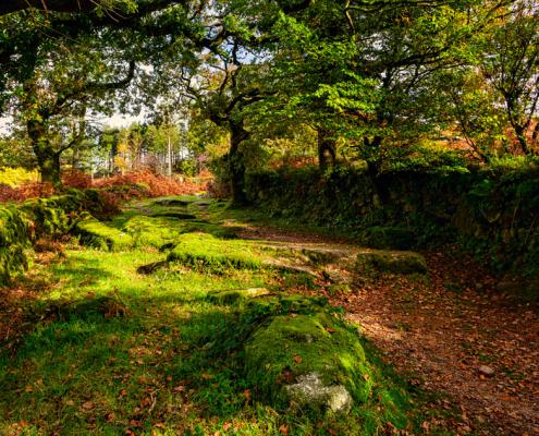 Burrator, Dartmoor, Devon.